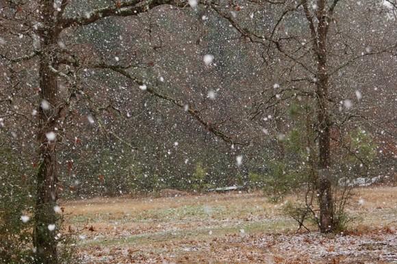 snow feb 10 031.jpg